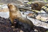 Sea Lion Family 2.jpg