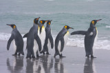 King Penguins by the sea.jpg