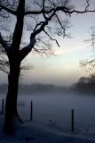 Misty Snow Field