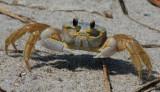 Crustaceons & Horseshoe Crab