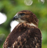 Birds of the Pocono Mountains, PA, 2011