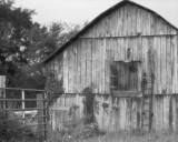 Barn on Cheesy Creek