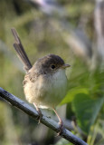 local_area__woodland_birds_with_sigma
