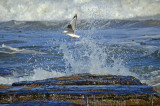 water_birds_from_feb_2012