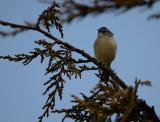 trip_to_nsw_birds