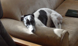 Carlow on the sofa