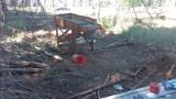 Cone Harvesting