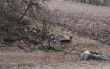 Dovhjortar vid skogsranden