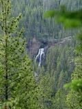 falls of the Yellowstone river through the trees