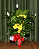 Flowers (2218)