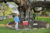 Laurie by the Columbus Oak Tree (2159)
