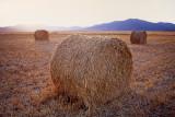 summer fields.3.jpg