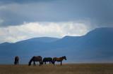 Kyrgyzstan25338wr.jpg