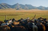 Kyrgyzstan25505wr.jpg