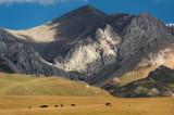 Kyrgyzstan25548wr.jpg