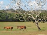 Horses in retirement