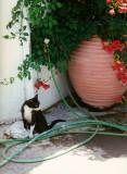 cat in Rethymnon
