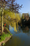 Oxford Canal Willow