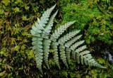 Fern frond on moss
