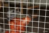 Terri det eneste egern vi har tilbage