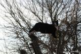 Felix in the apple tree