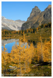 Autumn at Lake O'Hara - Hungabee Lake