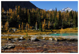 Autumn at Lake O'Hara - Opabin Plateau