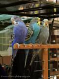 de Vogeltjesmarkt