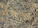 Closeup of pattern on rock
