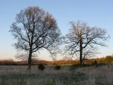 Glenhurst Meadows