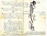 Premier topo des Piliers de l'Embarradère tracé par les frères Jean et Pierre Ravier