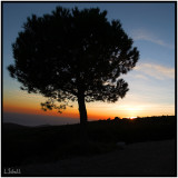 LS1D3634.jpg