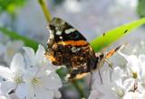 1205 Butterflies 161-009.jpg