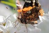 1205 Butterflies 161-020.jpg