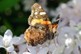 1205 Butterflies 161-036.jpg