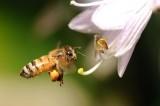 1207 Bees-13.jpg