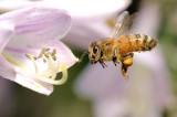 1207 Bees-32.jpg