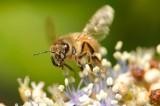 1207 Bees-62.jpg