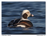 Harelde Kakawi - Long-tailed Duck