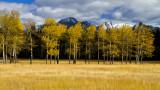 Banff Meadows