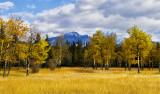 In the Mountain Meadows