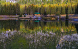 Reflections in the Spruce