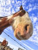 This Pony