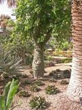 6-12-2011 Botanical Garden 13.jpg