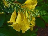 6-12-2011 Botanical Garden 2