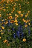 4-2010 Wildflowers 2.jpg