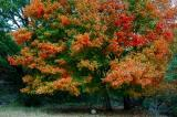 11-10-2005 Lost Maples11.JPG