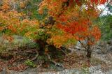 11-10-2005 Lost Maples25.JPG