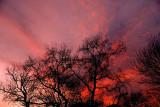 1-9-2008 Cirrus Sunset 2.jpg