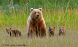 2012 Bear & Puffin PhotoTour - Lake Clark National Park, Alaska